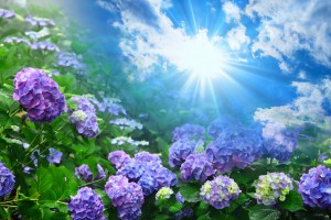 hiromi先生のワンポイント薬膳「6月」二十四節気 ~「芒種・夏至」~